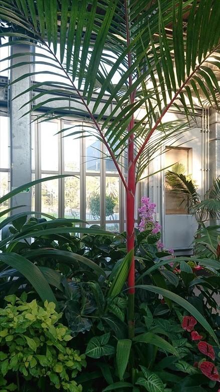 植物園12