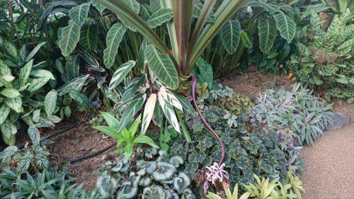 植物園13
