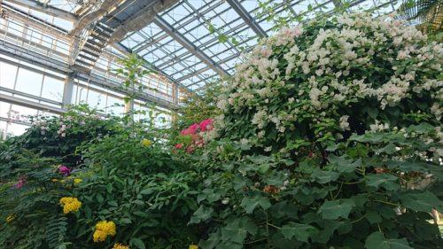 植物園16