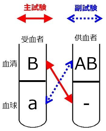 交差適合試験A-O